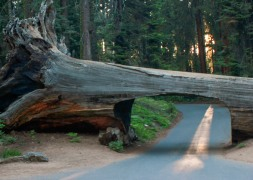 Sequoia National Park, CA